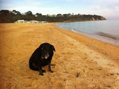Picture of House requiring House Sitter at Aussie House Sitters, Australia. Location Mount Martha, VIC 3934