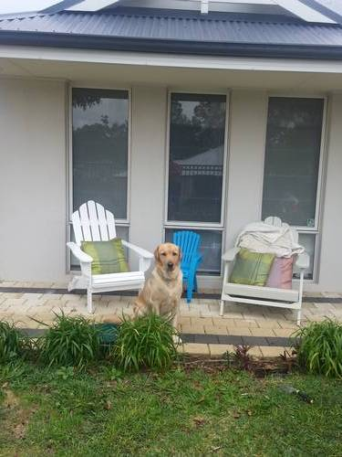 Picture of House requiring House Sitter at Aussie House Sitters, Australia. Location Wellard, WA 6170