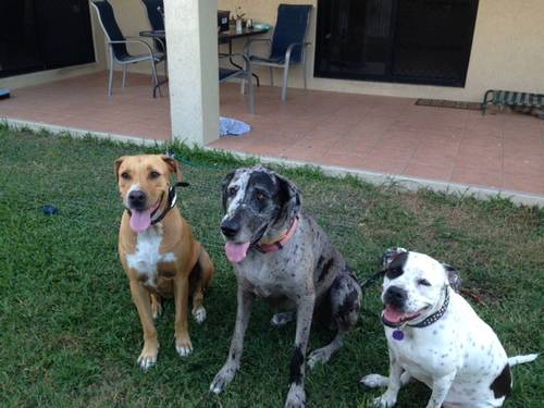 Picture of House requiring House Sitter at Aussie House Sitters, Australia. Location Kirwan, QLD 4817