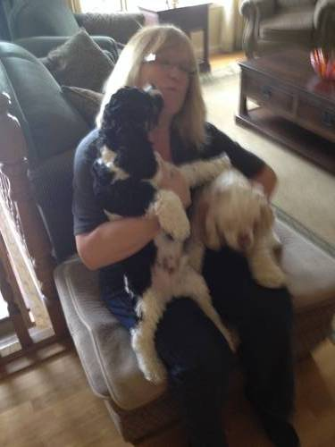 Picture of House Sitter, House Minder and Pet Sitter at Aussie House Sitters, Australia. User CoachCarol