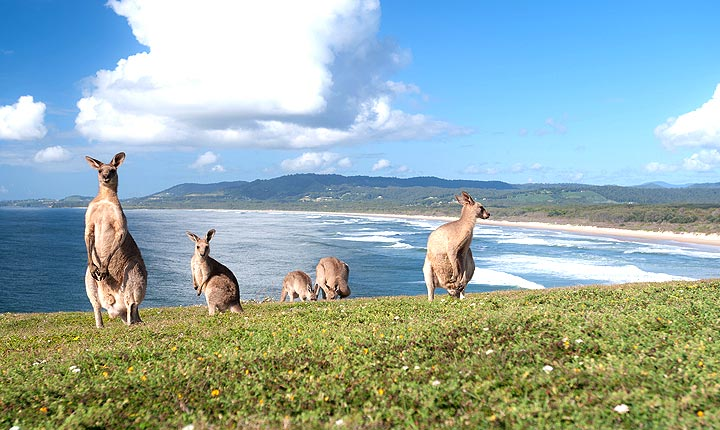 Pet and House Sitting in New South Wales - A beautiful place to live